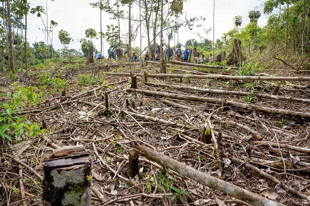 despale Nicaragua