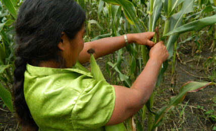 mujeres campesinas Oxfam